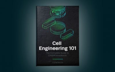Cell Engineering 101 – A step-by-step guide to CRISPR knockouts