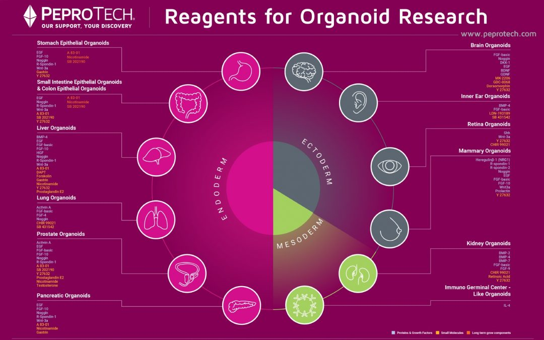 [Free Poster] Reagents for Organoid Research